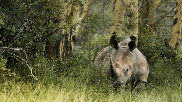 rhino20-435E9F424-3CDD-87DE-39A0-85DCC4DF1C87.jpg
